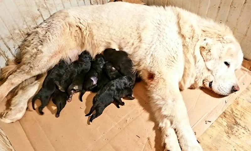 Allattamento dei cuccioli
